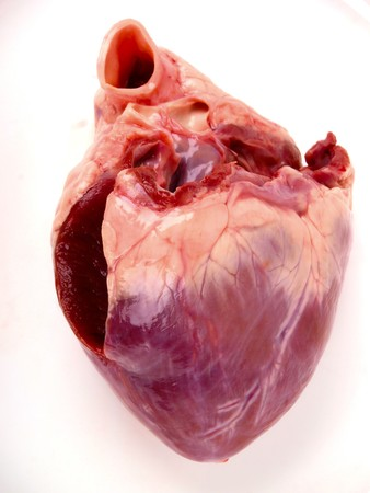 arteries: pig heart. Close up on white background Stock Photo