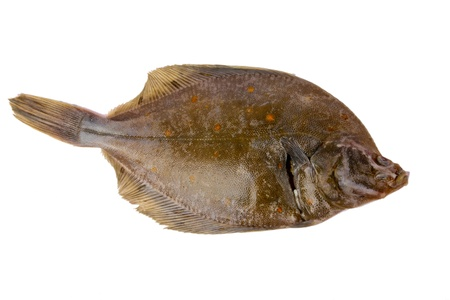 Fresh plaice fish  photo