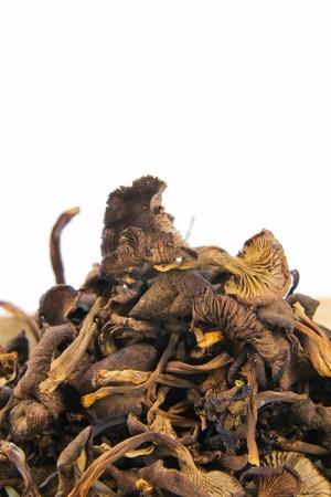 Trockene Pilze Standard-Bild - 10832050