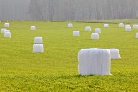 straw bales wrapped in plastic on a green field photo