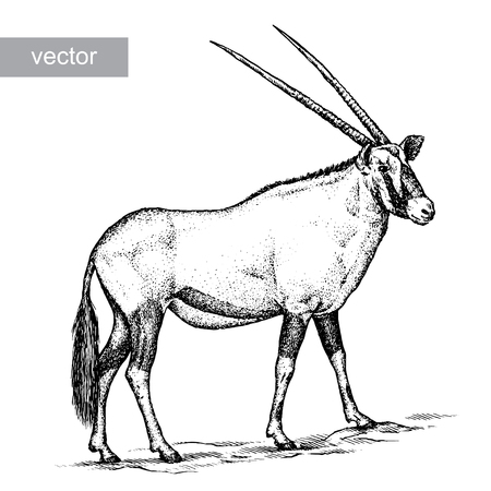 antelope: engrave isolated antelope vector illustration sketch. linear art