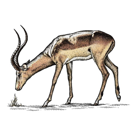 antelope: engrave isolated antelope illustration sketch. linear art