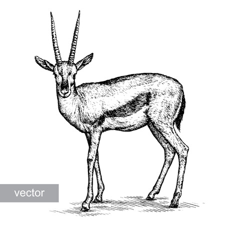 engrave isolated antelope vector illustration sketch. linear art