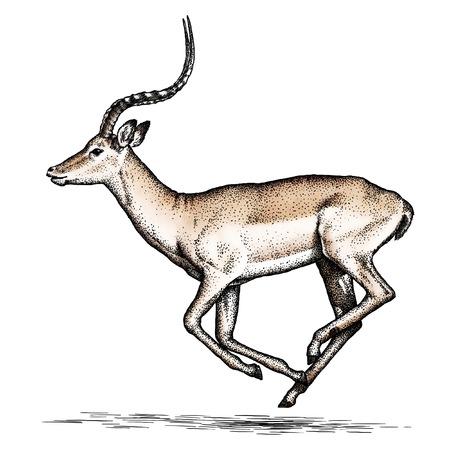 antelope: engrave isolated antelope illustration sketch. linear art