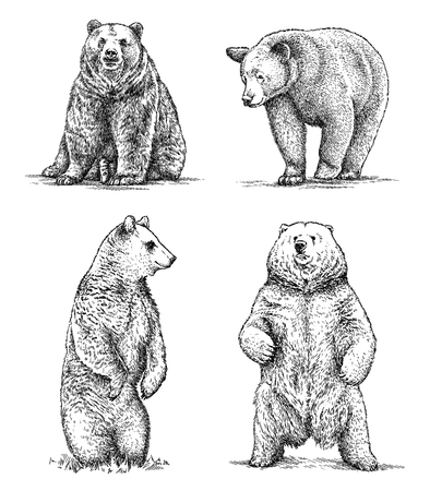 illustration isolated: engrave isolated bear illustration sketch. linear art