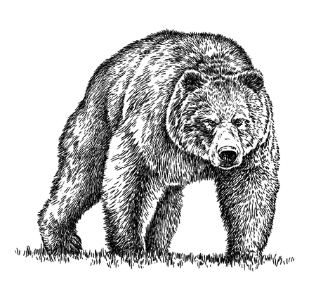 grizzly: engrave isolated bear illustration sketch. linear art