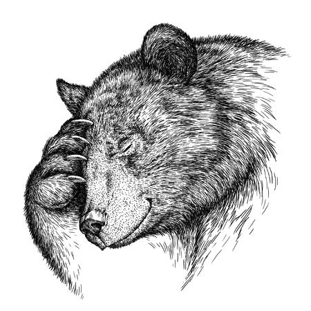 oso blanco: grabar aislado Ilustración oso boceto. lineal de la técnica