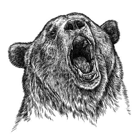 preto: gravar isolado ilustração do urso de esboço. arte linear Banco de Imagens