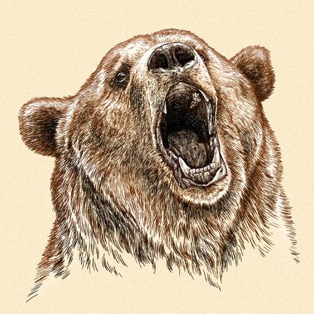 oso panda: grabar aislado Ilustración oso boceto. lineal de la técnica