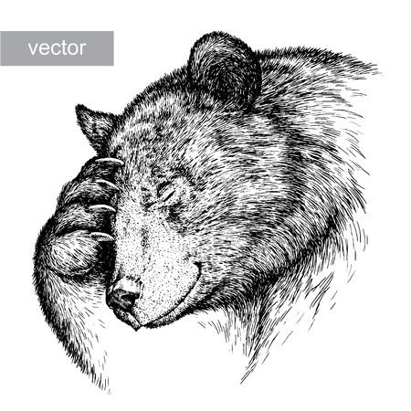 Graveren geïsoleerde vector beer illustratie schets. lineaire art Stockfoto - 46493930