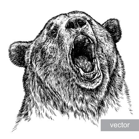 Graveren geïsoleerde vector beer illustratie schets. lineaire art Stockfoto - 46493931