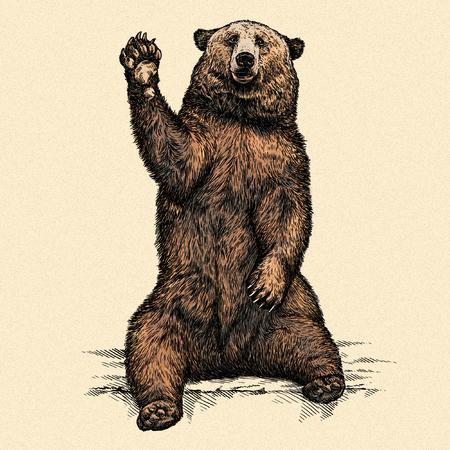 graveren geïsoleerde beer illustratie schets. lineaire art