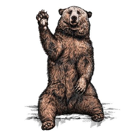 고립 된 곰 그림 스케치를 새기다. 선형 예술 스톡 콘텐츠