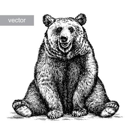 graveren geïsoleerde vector beer illustratie schets. lineaire art