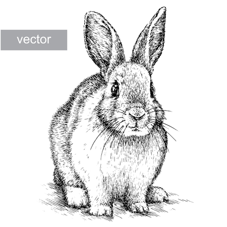 engrave isolated vector rabbit illustration sketch. linear art Vettoriali