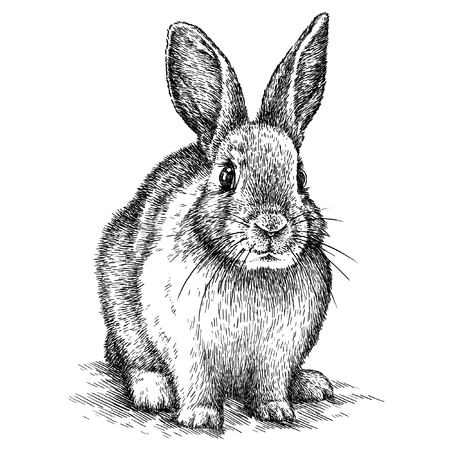 engrave isolated rabbit illustration sketch. linear art 写真素材