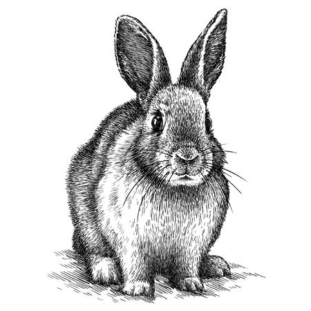 gravieren isolierten Kaninchen-Abbildung Skizze. lineare Kunst