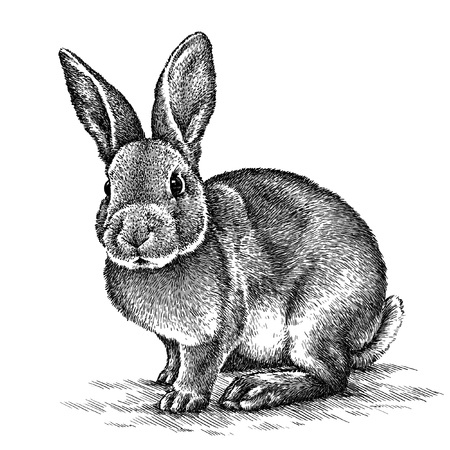 black and white line drawing: engrave isolated rabbit illustration sketch. linear art Stock Photo