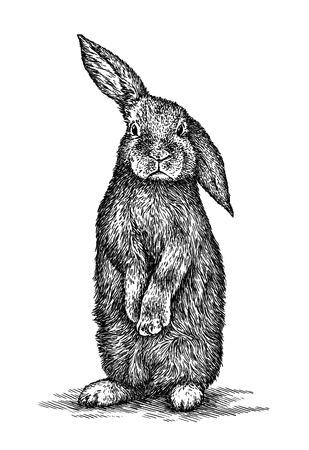 engrave isolated rabbit illustration sketch. linear art Foto de archivo