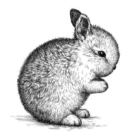 linear art: engrave isolated rabbit illustration sketch. linear art Stock Photo