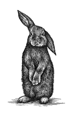 engrave isolated rabbit illustration sketch. linear art Stock Photo