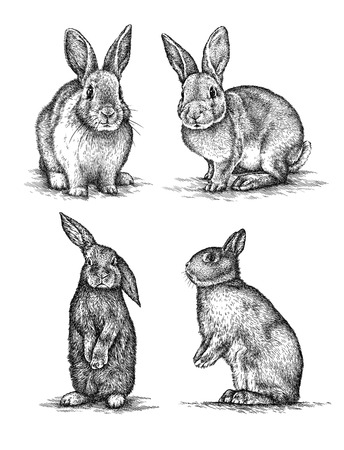 rabbits: engrave isolated rabbit illustration sketch. linear art Stock Photo