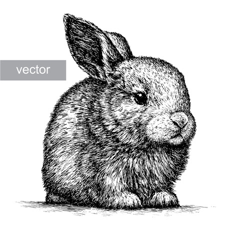 engrave isolated rabbit illustration sketch. linear art Vectores