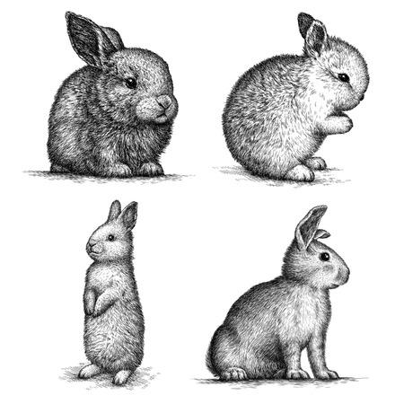 engrave isolated rabbit illustration sketch. linear art Standard-Bild