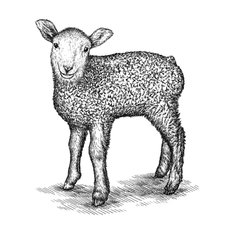 image lamb: engrave isolated sheep illustration sketch. linear art Stock Photo