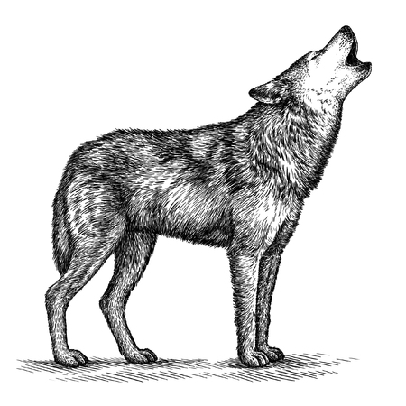 graveren geïsoleerd wolf illustratie schets. lineaire art