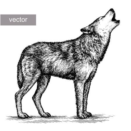 Graveren geïsoleerde vector wolf illustratie schets. lineaire art Stockfoto - 46494376