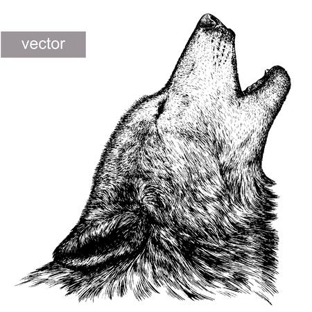 graveren geïsoleerde vector wolf illustratie schets. lineaire art