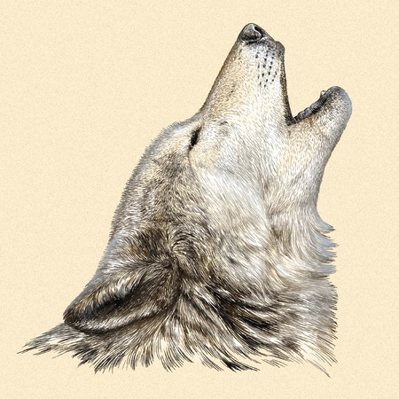 artful: engrave isolated wolf illustration sketch. linear art