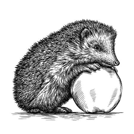 engrave isolated hedgehog illustration sketch. linear art