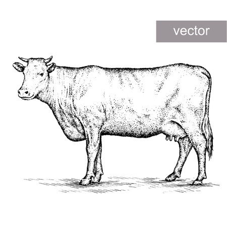 artful: engrave isolated cow vector illustration sketch. linear art