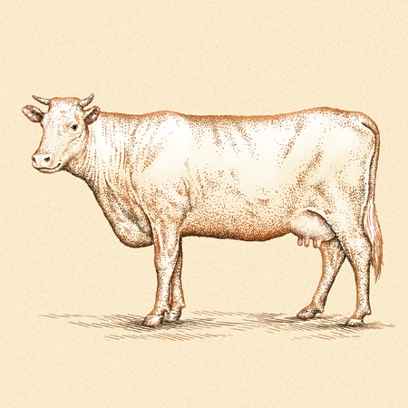 linear art: engrave isolated cow illustration sketch. linear art