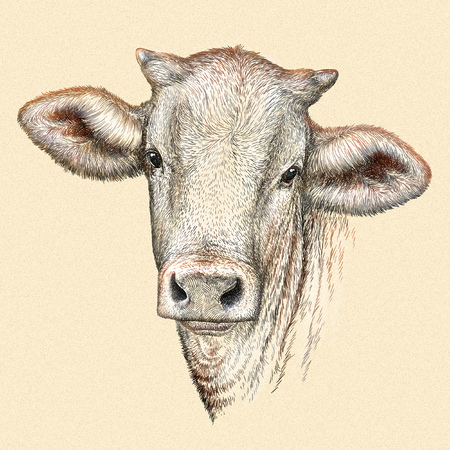 ruminant: engrave isolated cow illustration sketch. linear art