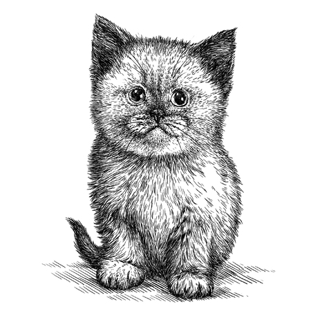 catnip: engrave isolated kitten illustration sketch. linear art