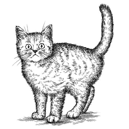 engrave isolated kitten illustration sketch. linear art