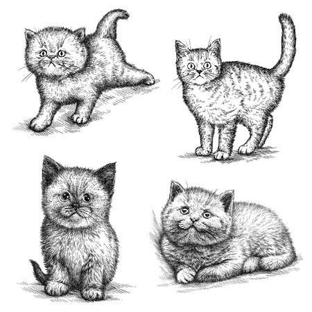 kitten: engrave isolated kitten illustration sketch. linear art