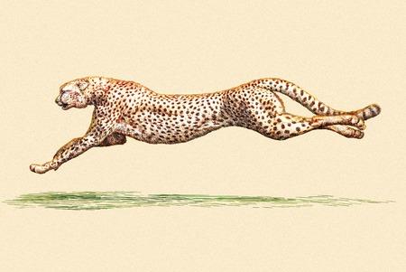 Grabar aislado Ilustración de leopardo boceto. lineal de la técnica Foto de archivo - 46498187