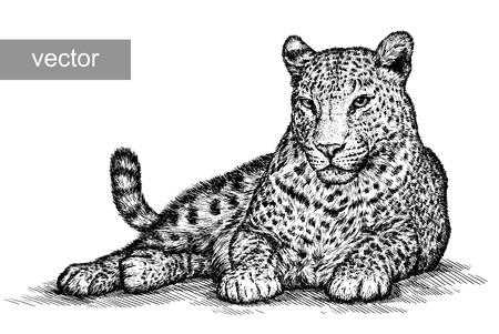 chita: grabar vectorial aislado leopardo ilustración boceto. lineal de la técnica