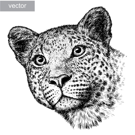 leopards: engrave isolated vector leopard illustration sketch. linear art