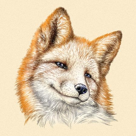 engrave isolated fox illustration sketch. linear art Foto de archivo