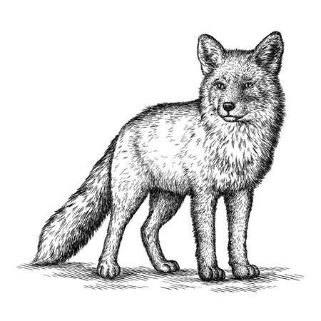 dessin noir et blanc: graver isolé illustration de renard croquis. art linéaire