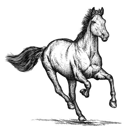 分離された馬イラスト スケッチを刻みます。線形の芸術 写真素材