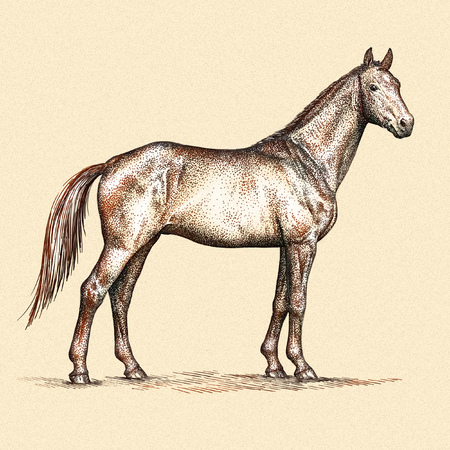 linear art: engrave isolated horse illustration sketch. linear art
