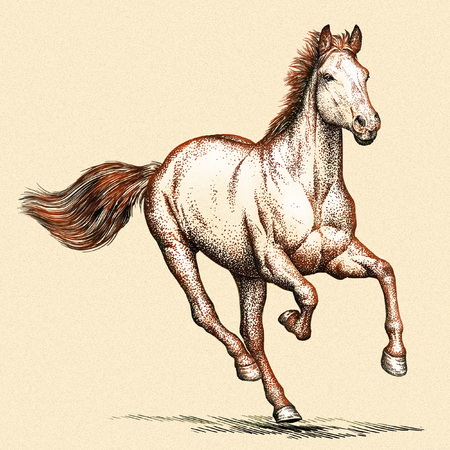trot: engrave isolated horse illustration sketch. linear art