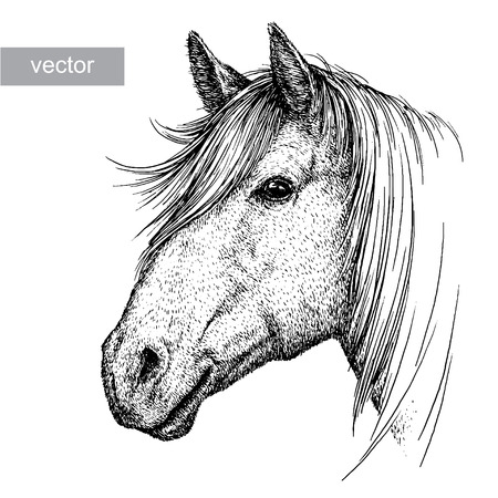 engrave isolated horse vector illustration sketch. linear art Vectores