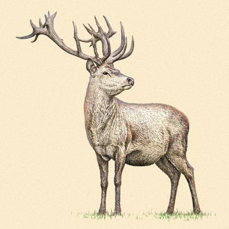 고립 된 사슴 그림 스케치를 새기다. 선형 예술